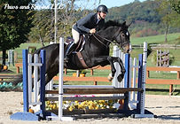 NJ hunter jumper horses for sale Torsilieri Show Stables Gus August show horses horse