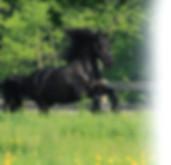 Best Horse Show photographer, horse show videographer, horse show videography, Equestrian Marketing, Equine Sales, NJ, NY, PA, hunter pony, photographic