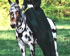 side saddle, sidesaddle, ride side saddle, ride aside, ride sidesaddle, how to ride side saddle, how to fit a side saddle, annual gathering, international side saddle organization, isso, side saddle costume, side saddle attire