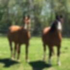 Horses-Square-1.jpg