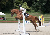 horses for sale NJ NY Imported Torsilieri Show Stables Gus August show horses horse