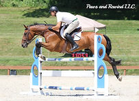 Buy and sell horses with August Torsilieri Torsilieri Show Stables Gus August show horses horse