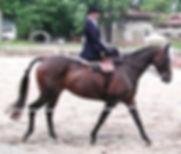 side saddle, sidesaddle, ride side saddle, ride aside, ride sidesaddle, how to ride side saddle, how to fit a side saddle, annual gathering, international side saddle organization, isso, formal hunt side saddle attire, side saddle attire