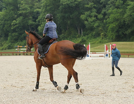 professional videographer, equestrian videographer, princeton show jumping, equine marketing, horse show videos, horse show videography, videography, horse videos, marketing, horse sales video