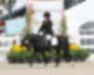 Rider Sponsorship Opportunities Dressage at Devon dressage rider photography videography photographer NJ NY PA photo photographic marketing equine website creation