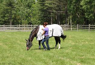 full service board pastures NJ Stockton boarding horse horses horseback riding cheval Linda Sheridan Show Jumpers