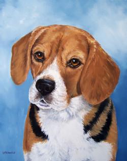 Beagle 800.jpg