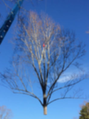 TreeLift.JPG