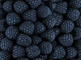 Digital Drawing of Blackberries