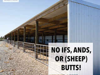 No if's, ands, or (sheep) butts!