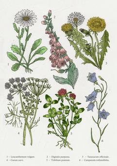 440. Fera Plantae I.png