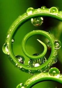 5-spirale-vegetale-unalome-280x400.jpg
