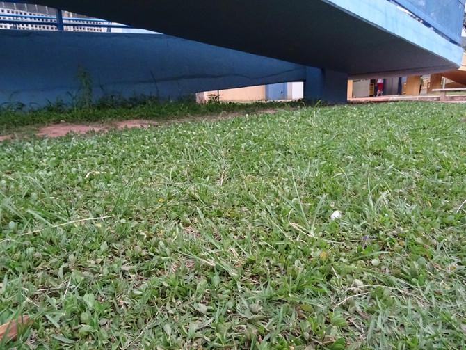 Tapete verde na escola