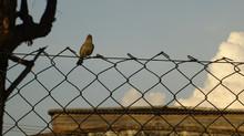 Pássaro, a pedido de uma aluna