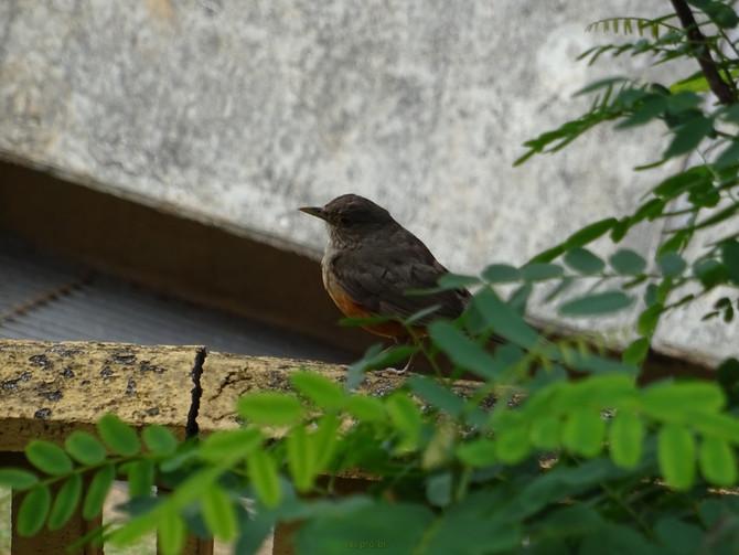 Pássaros no solário