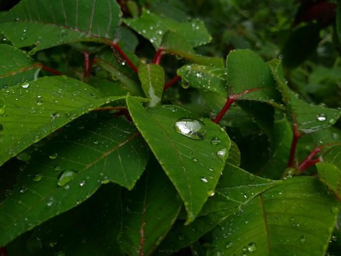 Chuva no jardim urbano
