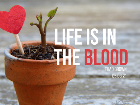 Life Is In The Blood