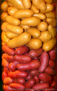 patate-2couleurs