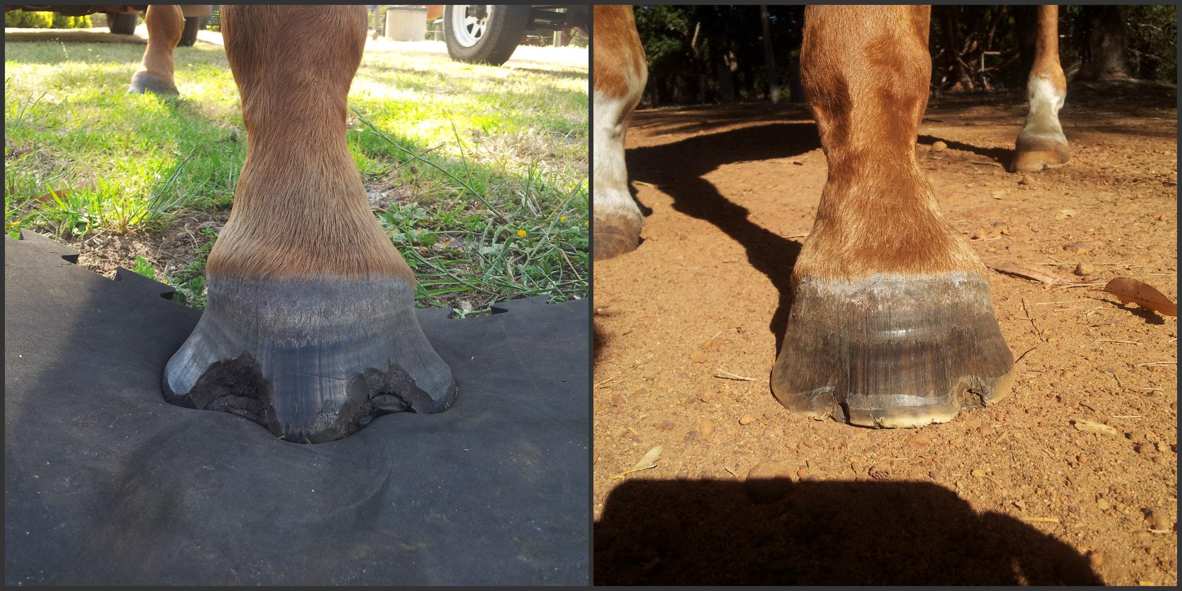 Seedy Toe