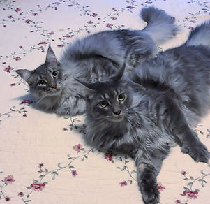 Phoebe and Oliver Mason_edited_edited.jpg