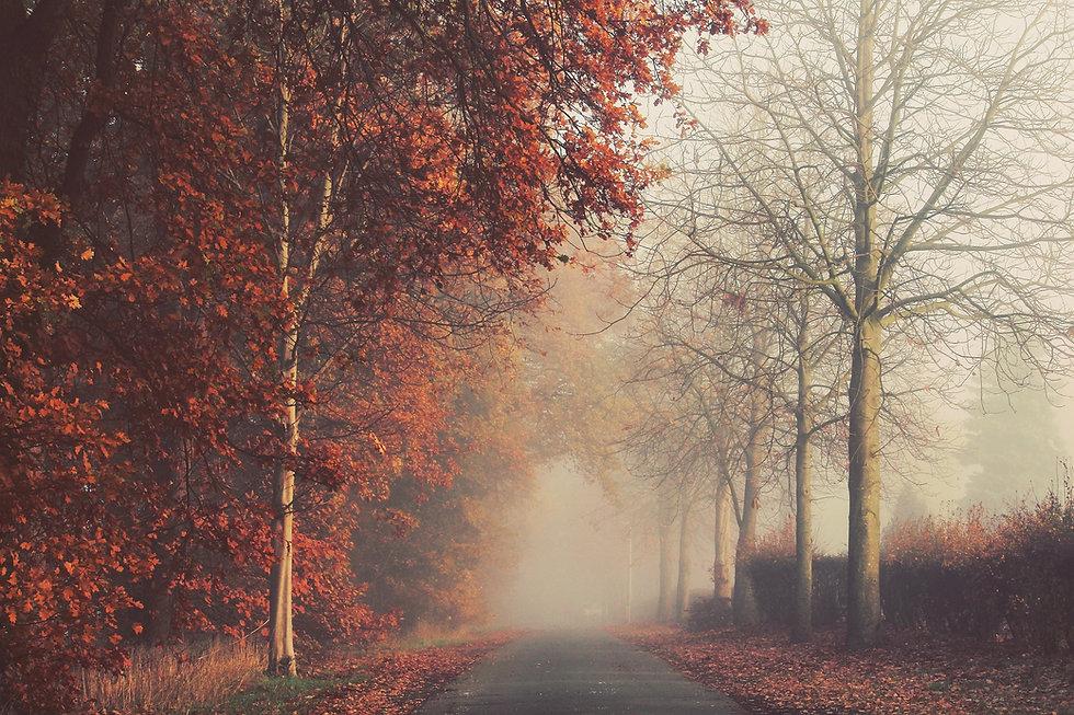 autumn-3840141_1920.jpg