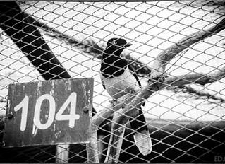 O Prisioneiro 104