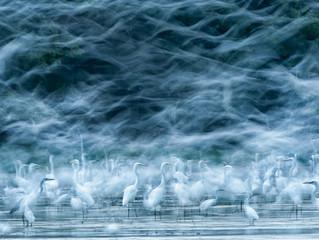 O melhor da National Geographic - Por : Monike Furtado