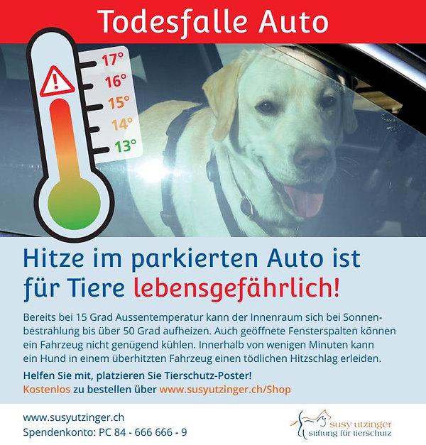 Hitze im Auto, Gefhr für Hunde