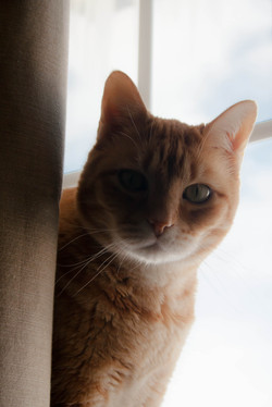 Have we seen your cat recently?