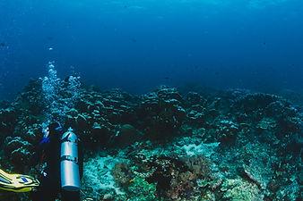 scuba-diver-explore-coral-reef.jpg