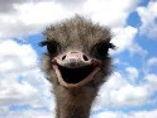 ostrich%205_edited.jpg