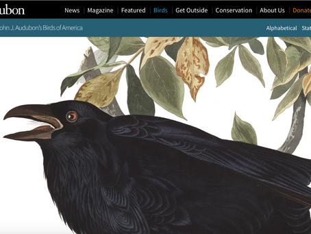 John J. Audubon's Birds of America