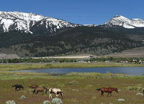 Virginia Range Horses Saved - For Now