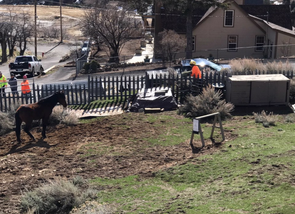 Rescuing the 4th Ward School horse