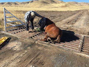 Another Horse Rescue