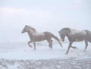 Help the Volunteers Who are Saving the Horses