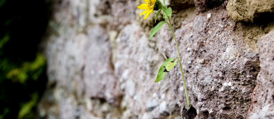 Resilience in Recovery: 7 Steps to Strengthening Your Struggle