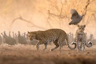 JK Leopard_.jpg