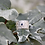 Thumbnail: Wide Silver Hoarfrost band with saphire