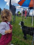 Herd Fest 7.jpg