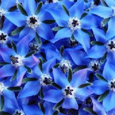 Edible Flowers Borage