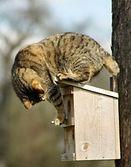 Cat-on-Birdhouse.jpg