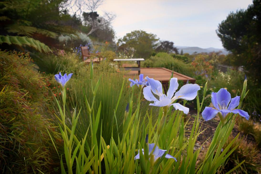 Garden_L3_hillside3.jpg