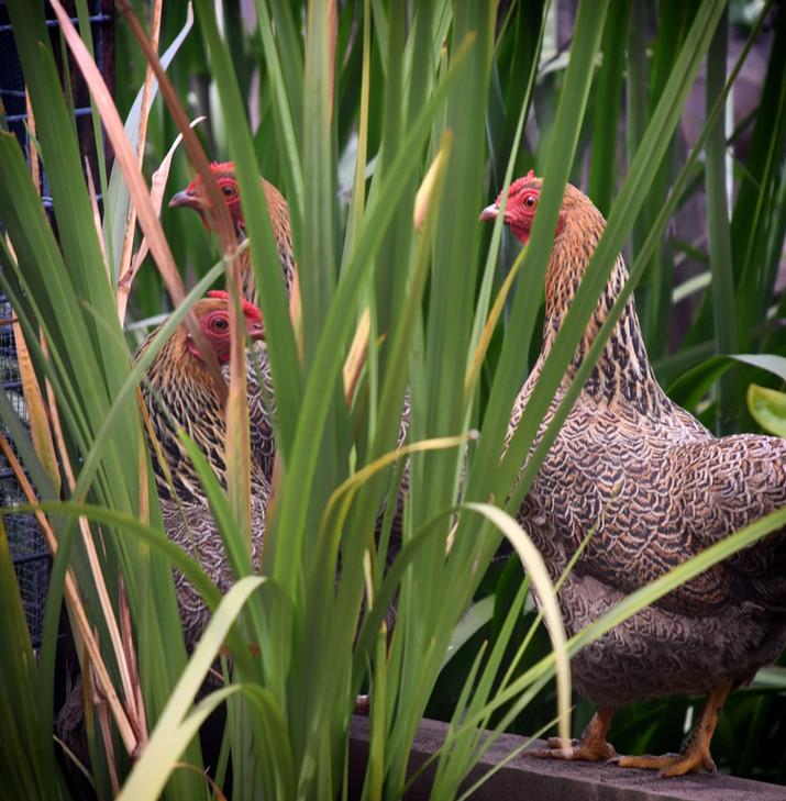 Garden_L3_hillside2.jpg