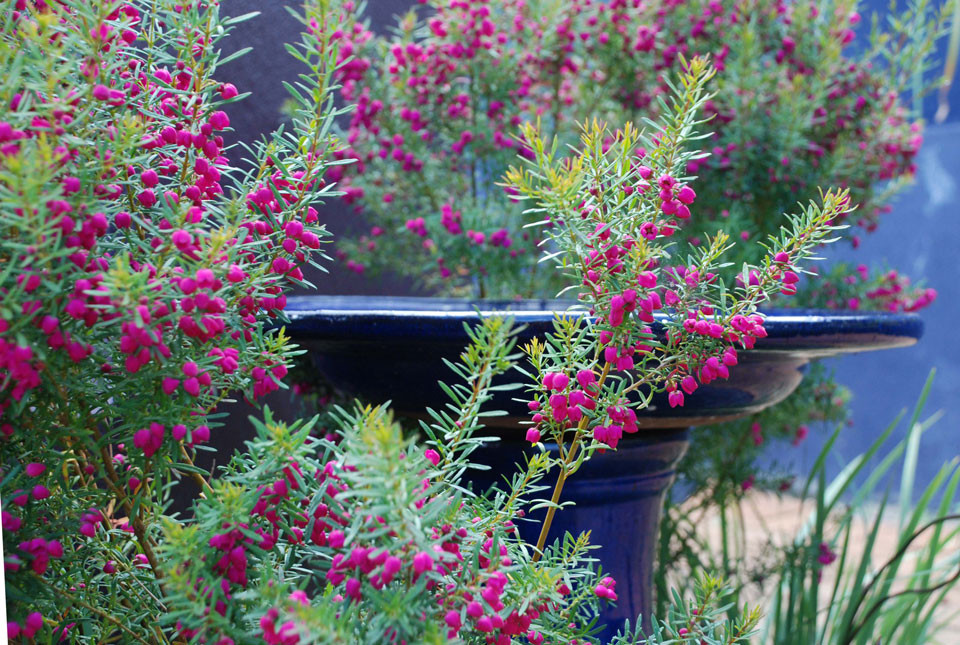 Garden_L3_terrace5.jpg