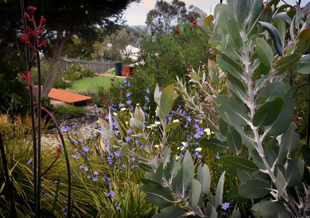 Garden_L3_hillside1.jpg
