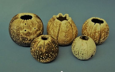 Ceramic Workshop.jpg