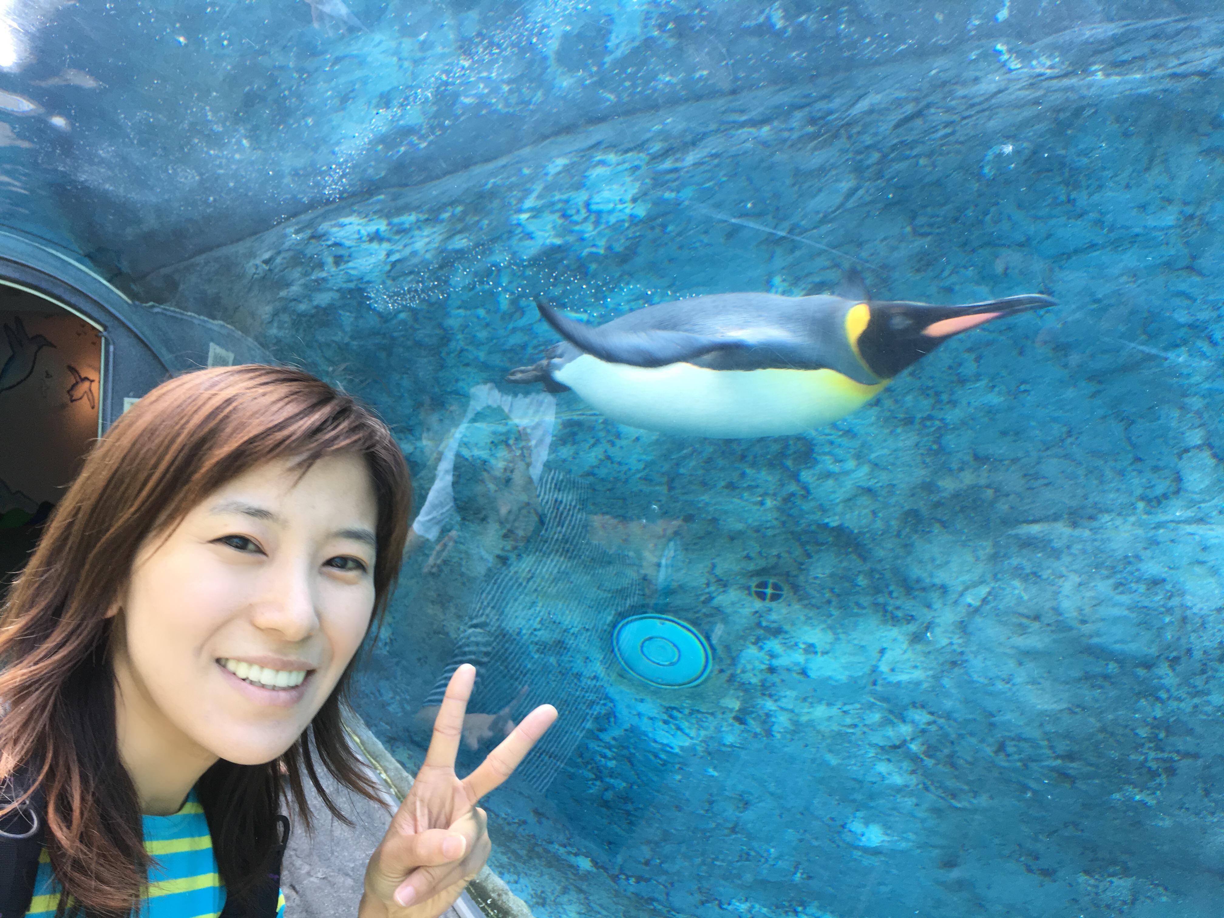 ペンギンが鳥
