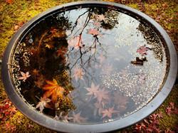 水の中の楓