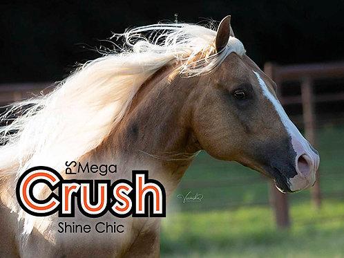 "PS Mega Shine Chic (""Crush"")"